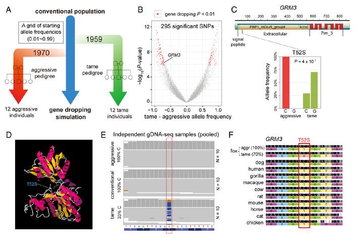 Рис. 4. Анализ частот полиморфизмов в генах лис