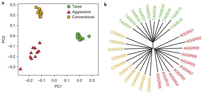 Рис. 5. Два варианта кластерного анализа 30 геномов лис