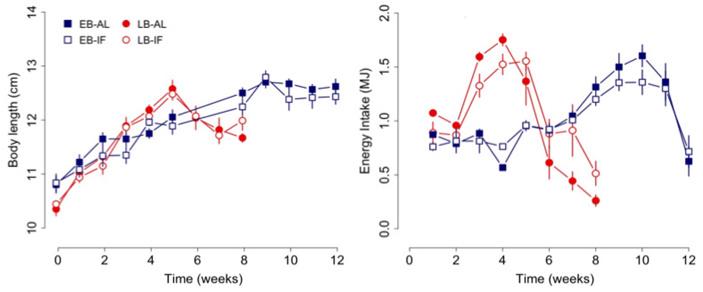 Рис. 2. Изменение длины тела детенышей садовой сони со временем