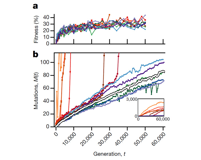 Рис. 2. Динамика приспособленности и накопления мутаций в 12 популяциях