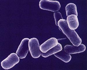 инфекции