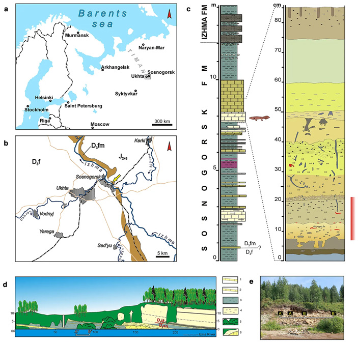 Рис. 2. Место находки Parmastega aelidae под Сосногорском