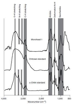 Рис. 5. Сравнение спектров Фурье-ИКС хитина из микрофоссилии Ourasphaira giraldae
