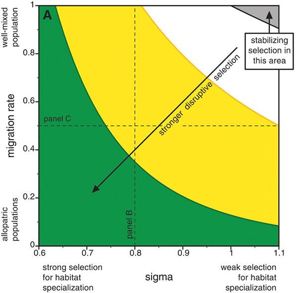 Рис.4. Зависимость симпатрического видообразования от полового отбора. Рис. из обсуждаемой статьи вScience