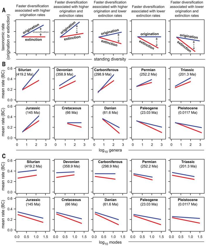 Долгосрочный эволюционный успех обеспечивается не ускоренной диверсификацией, а устойчивостью кизменениям среды