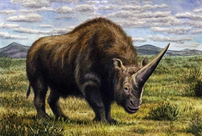 Внешний вид Elasmotherium sibiricus