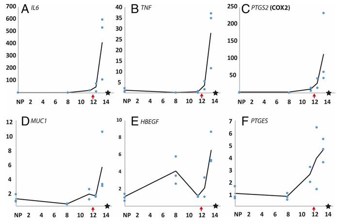 Рис. 3. Уровень экспрессии известных маркеров имплантации плацентарных у опоссума по дням
