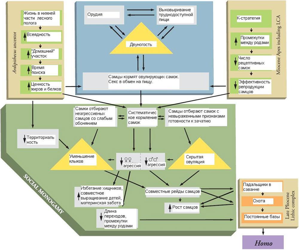 """Модель Лавджоя:  """"адаптивный комплекс """" (adaptive suite) ранних гоминид.  Рис. из обсуждаемой статьи в Science."""