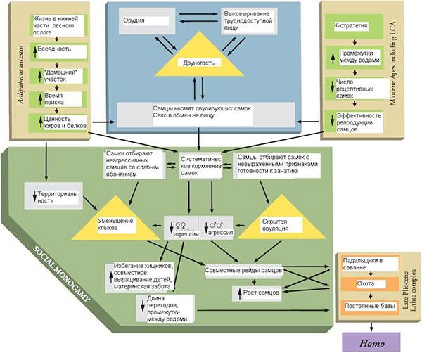 Модель Лавджоя: «адаптивный комплекс» (adaptive suite) ранних гоминид. Рис. из обсуждаемой статьи в Science