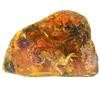 Птенец из бирманского янтаря помог уточнить особенности развития мезозойских птиц