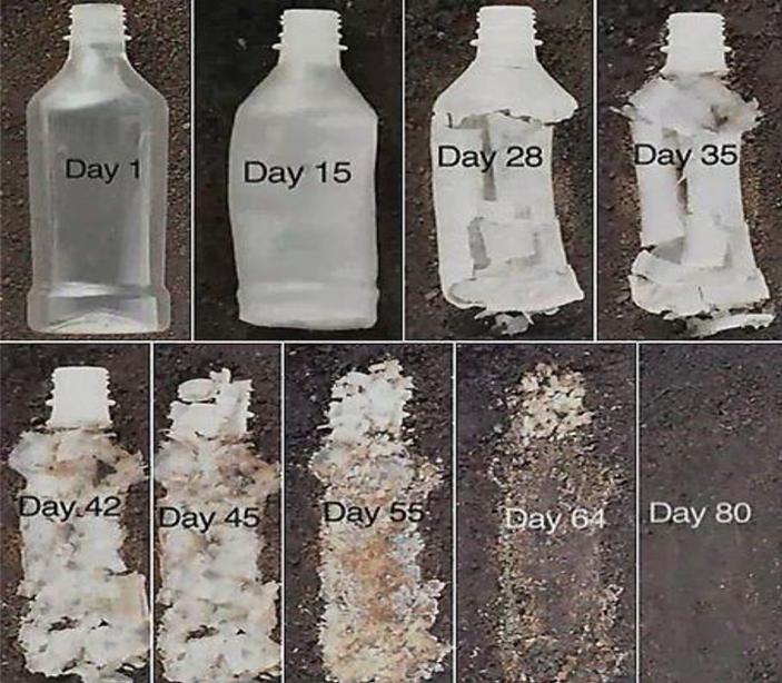 Генномодифицированный природный фермент эффективно разбирает пластик на кирпичики
