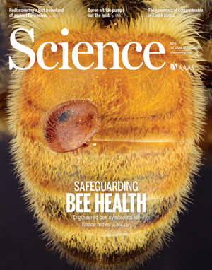 Генно-модифицированные бактерии защитят пчел от вирусов и клещей