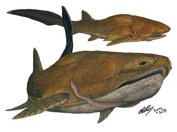 Рис. 1. Entelognathus primordialis. Рисунок Брайана Чу (Brian Choo), одного из соавторов обсуждаемой статьи вNature