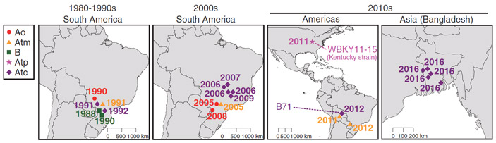 Рис. 3. История распространения штаммов P. oryzae, паразитирующих на пшенице