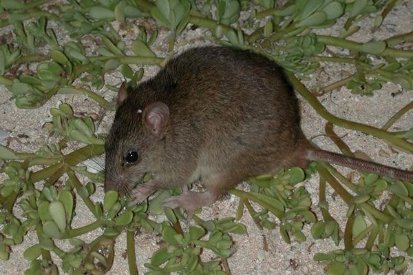 extinct_rodents_smirnov_1_600.jpg