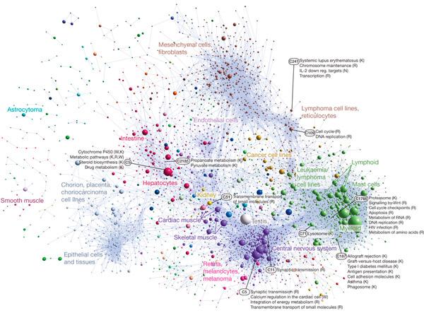 Упрощенная схема синхронной экспрессии генов