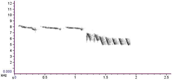 Рис. 2. Сонограмма песни самца обыкновенной лазоревки