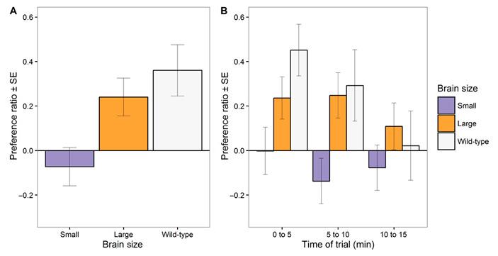 Рис. 3. Степень предпочтения ярких самцов разными самками