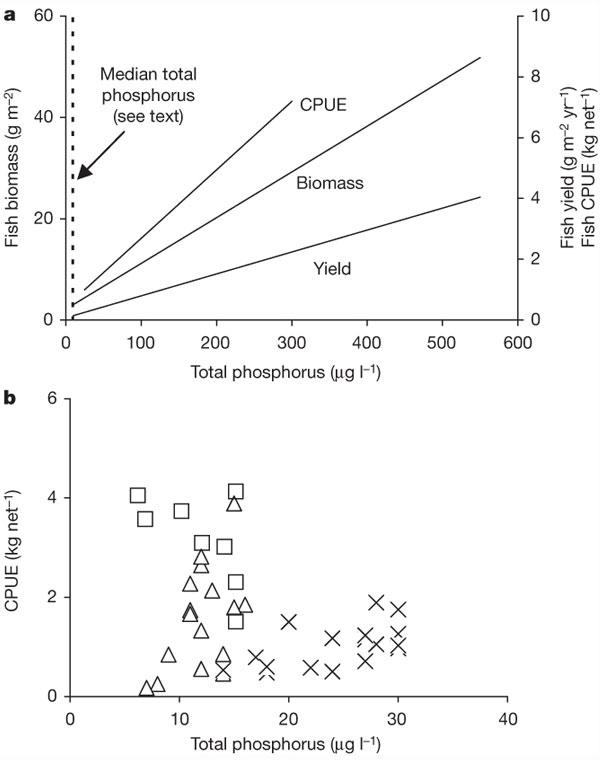 Рис1. a— Зависимость биомассы рыб (biomass, г/м2), прироста массы рыб за год (fish yield fish, г/м2/год), и «вылова рыбы в расчете на промысловое усилие», CPUE, кг/сеть) от содержания фосфора в воде (микрограмм/л) по данным большой выборки разных озер. Вертикальной пунктирной линией показан средний уровень концентрации фосфора. Он оказался равным всего 12мкг/л— усреднено по множеству озер Фенно-Скандинавии и Северной Америки (Висконсин). Очевидно, что в большинстве озер фосфора содержится очень мало, но для всей совокупности данных положительная зависимость массы рыбы от содержания в воде фосфора выявляется достаточно четко. b— Зависимость вылова рыбы от содержания в воде фосфора, но только для озер с низким содержанием биогенных элементов (фосфора не более 30мкг/л). Разными значками обозначены озера: из Финляндии (крестики), Швеции (треугольники) и Новой Зеландии (квадратики). Очевидно, что какой-либо выраженной зависимости в данном случае не наблюдается. Рис. из обсуждаемой статьи Jan Karlsson etal. в Nature