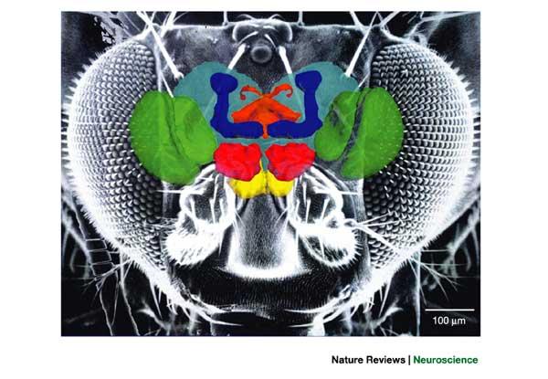 Элементы новости науки мухи хранят информацию на съемных дисках