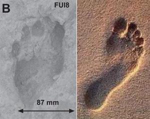 [img]http://elementy.ru/images/news/footprint_homo_erectus_vs_modern_300.jpg[/img]