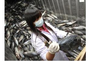 В августе 2012года был зарегистрирован самый высокий уровень радиоактивного заражения у фукусимской рыбы