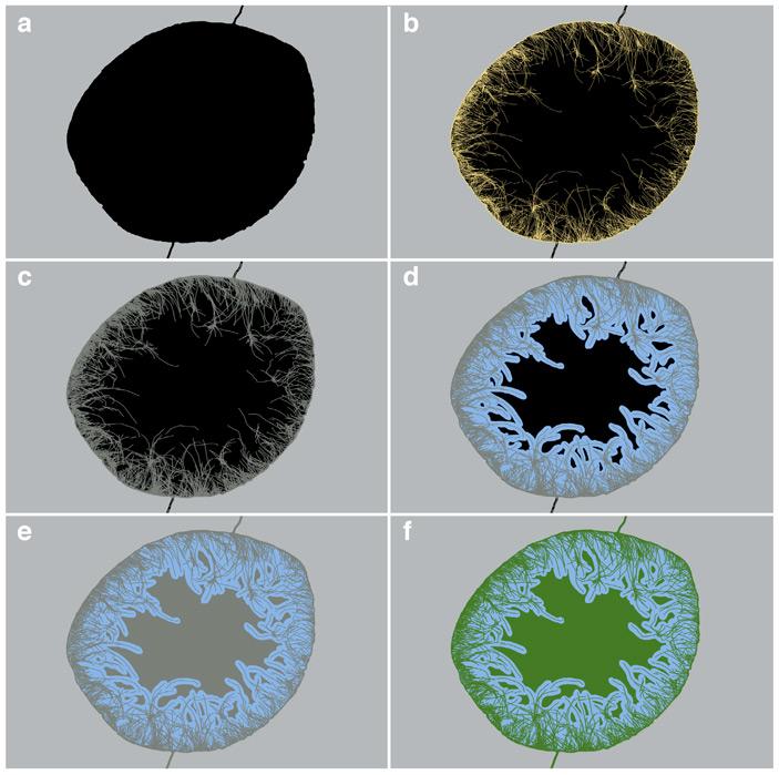 Механизм фоссилизации и образования разнородного материала желваков