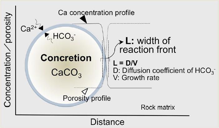 Рис. 3. Концептуальная схема образования сферических конкреций