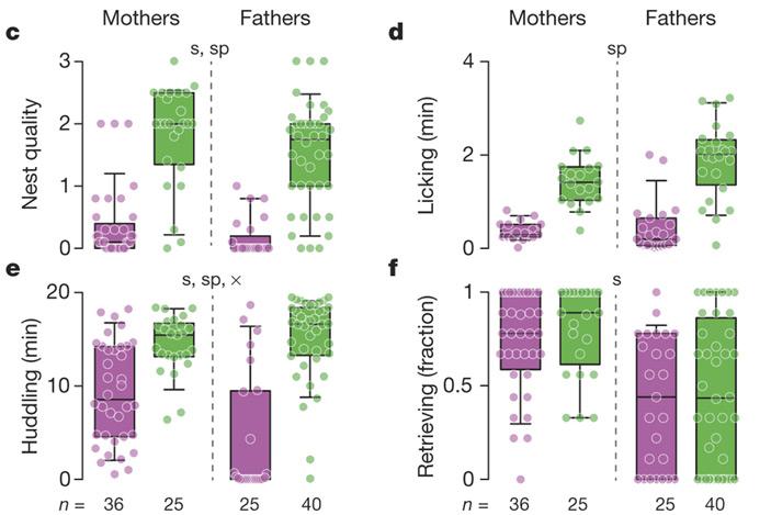 Рис. 2. Результаты тестов на интенсивность родительской заботы у полигамных оленьих хомячков и моногамных береговых хомячков