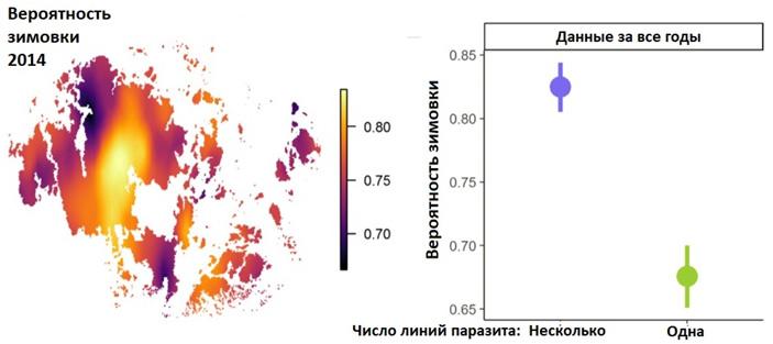 Изолированные популяции подорожника хуже справляются спаразитическим грибом