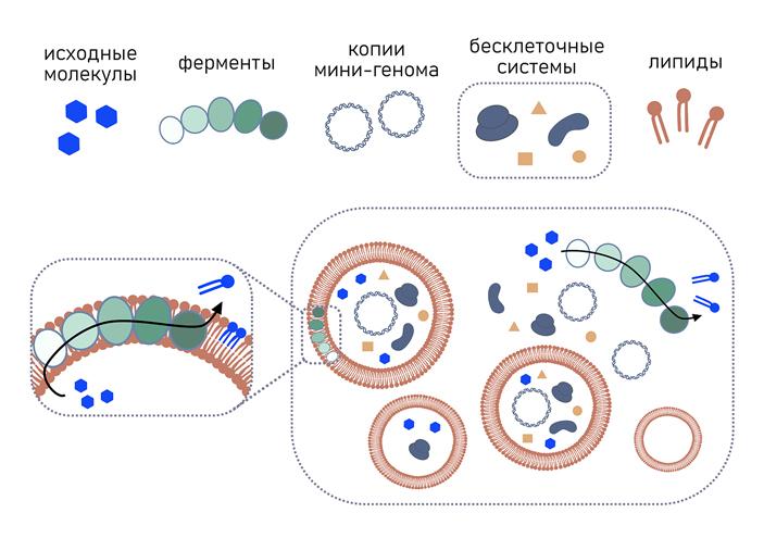 Рис. 3. Схема эксперимента по созданию искусственных клеток