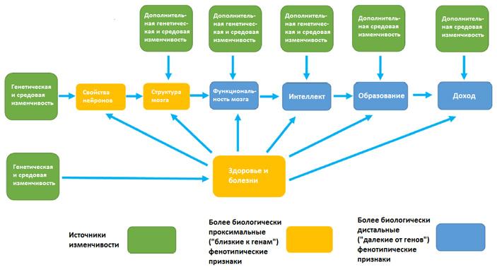 Рис. 2. Предполагаемая структура причинно-следственных связей между генами и средой с одной стороны и интеллектом, образованием и доходом — с другой