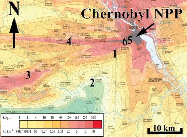 Как влияет радиация на иммунитет - 7d6
