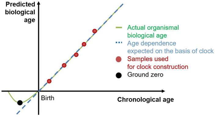Рис. 5. Экстраполяция графика для биологического возраста