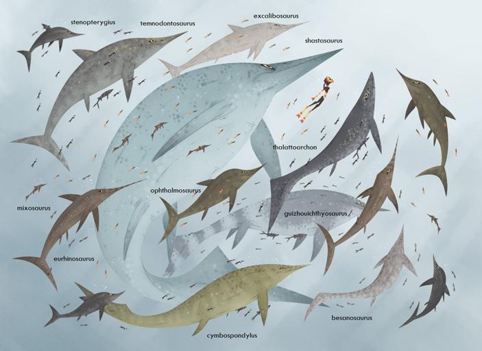 Триасовый ихтиозавр Guizhouichthyosaurus оказался сверххищником