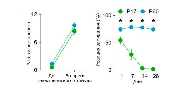 Сравнение забывчивости молодых и взрослых мышей