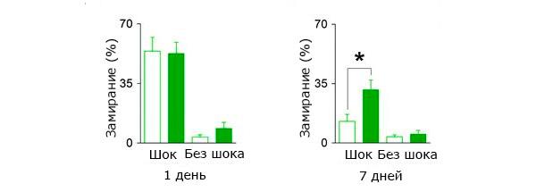 Сравнение забывчивости мышат с разной интенсивностью нейрогенеза