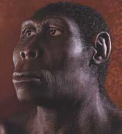 По-видимому, многие разновидности древних людей, до сих пор считавшиеся вымершими тупиковыми ветвями, не исчезли бесследно. Их прямые потомки живут и поныне— это мы с вами (изображение с сайта www.d.umn.edu)