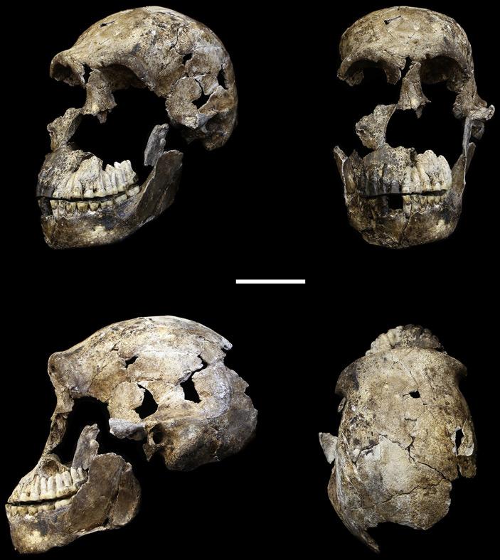 Хорошо сохранившийся череп <i>Homo naledi</i> из пещеры Райзинг Стар