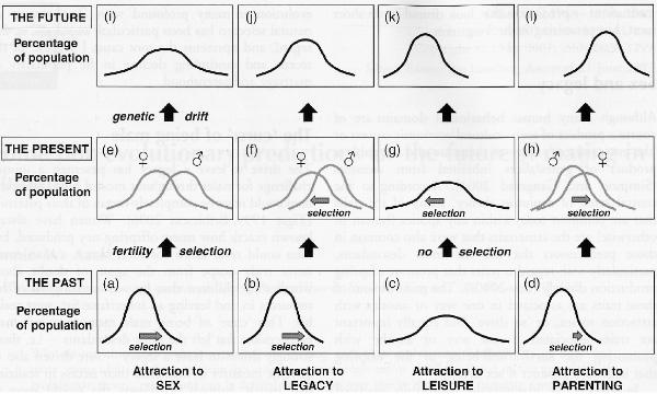 Схема естественного отбора в человеческой популяции по четырем признакам, имеющим отношение к интенсивности...