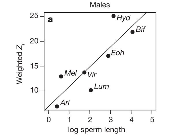 Имеет ли сперматозоид признак мелкий