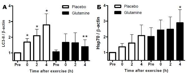Рис.3. Аутофагия и уровень HSP70 вмононуклеарных клетках крови добровольцев после физической нагрузки