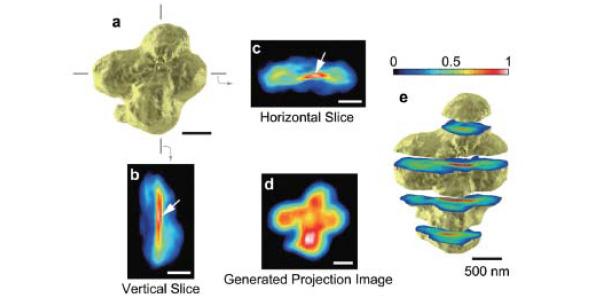human_chromosome_electronic_density_3d_map_600.jpg