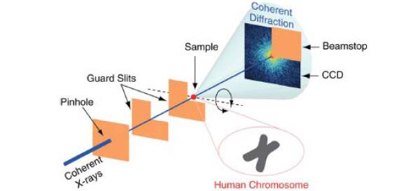 human_chromosome_x-ray_imaging_600.jpg