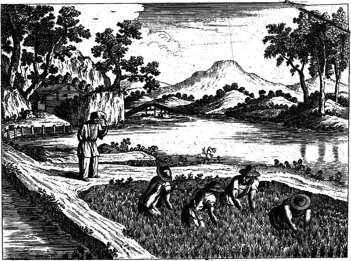 Рис. 1. Крестьяне эпохи династии Сун пропалывают рис