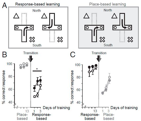 Рис. 2. Схемы обучения мышей и данные по их успехам