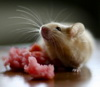 """""""Сигналы голода"""" от гипоталамуса замедляют формирование новых нейронов у мышей"""