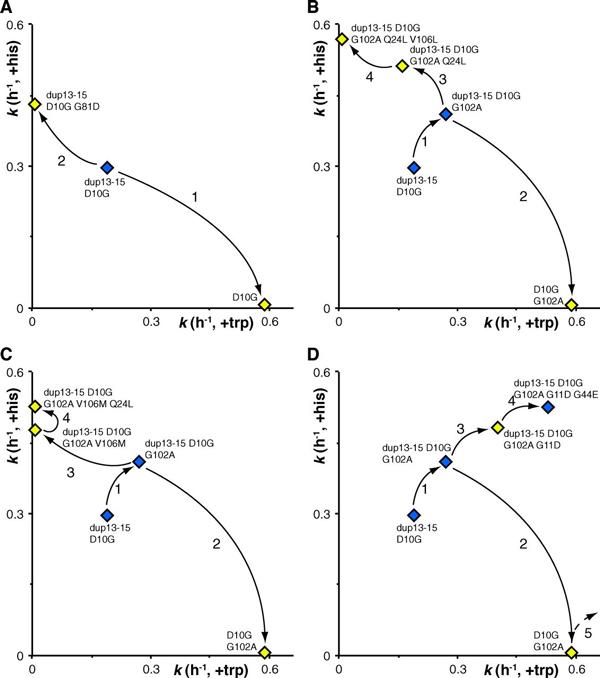 Четыре примера эволюционных траекторий, зафиксированных в эксперименте