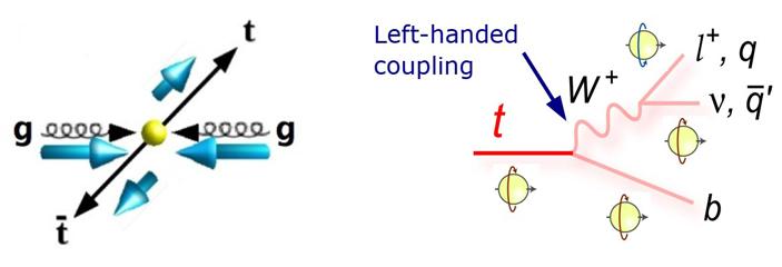 Рис. 2. Слева: спины топ-кварка и топ-антикварка, родившихся встолкновении двух глюонов одинаковой спиральности, противоположны (тоесть их спиральности— одинаковы). Справа: из-за особенностей слабого взаимодействия топ-кварк при распаде порождает правый положительно заряженный лептон