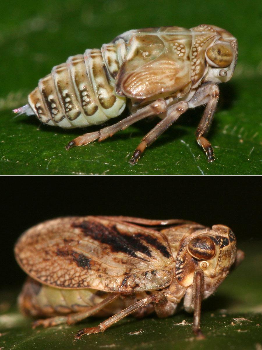 Микроскопические шестерни позволяют насекомым